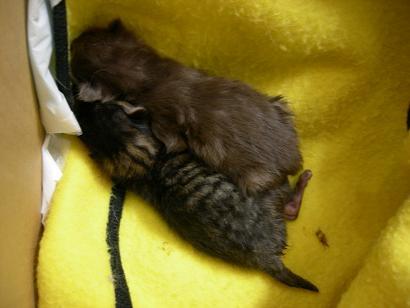 小さい猫団子