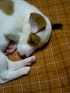 寝ているときは天使