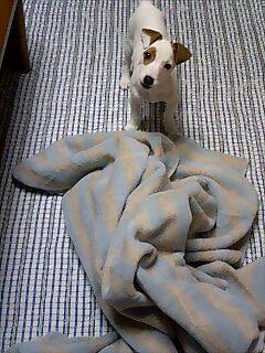 寝るんだから・・・毛布はぐちゃぐちゃにしないの><