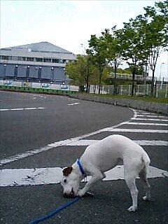 万博の駐車場
