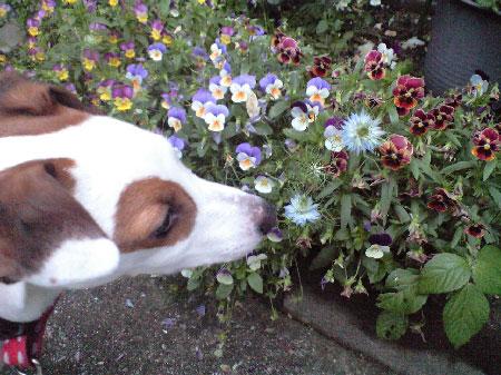 花とパウリー