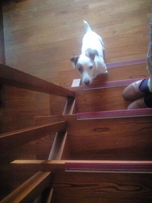 階段は登れない