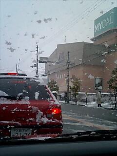 初雪がどっさり