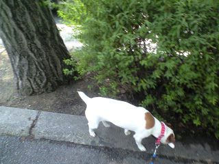 木陰を歩きたい季節です