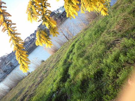 ミモザと松沢池
