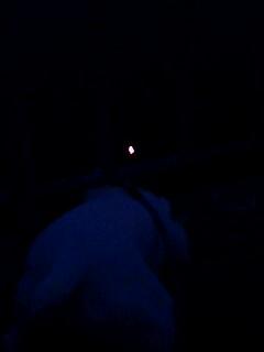 お月さんすぐ近くに見えるのになあ