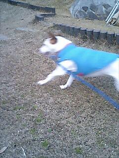 走るパウリー2
