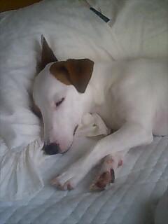 枕で寝るのが大好きです