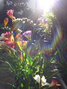 日陰の庭に咲くフリージア