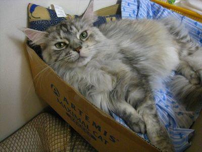 アイシャと箱2