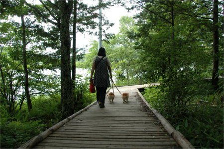 白樺湖の遊歩道を散策
