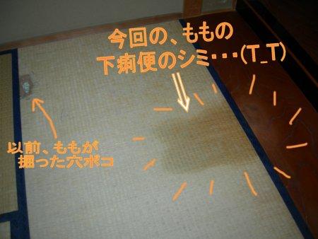 最悪・・・(T_T)