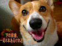 ピンボケで、すんましぇ~ん!(^-^;)