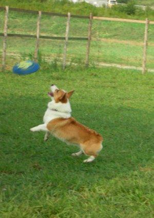 ジャンプ?♪