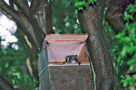 フクロウの巣箱の悠
