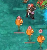 桜カボチャ増殖