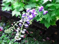 naka_garden_03.jpg