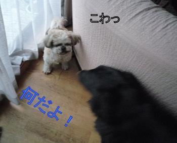 1_convert_20110214170945.jpg