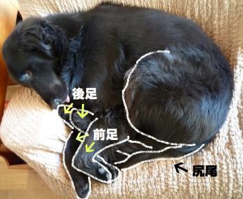 雜ウ-1_convert_20101209133313