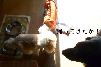 繝代・繧キ繝シ_convert_20110125131511