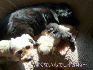 驥阪>_convert_20110207145548
