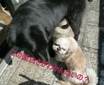 ・・011_0216_125036-P1160204_convert_20110216135312