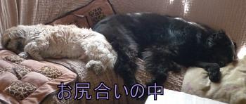 縺イ_convert_20110310125352