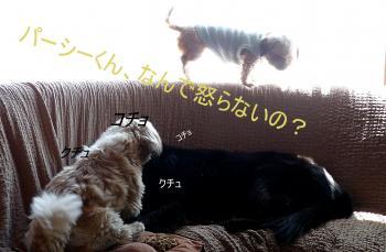 縺ッ_convert_20110310125331