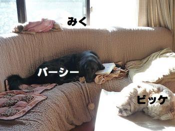 2011_0107_092827-P1120483_convert_20110107135613.jpg