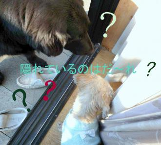 2011_0126_085828-P1140417-1_convert_20110126125226.jpg