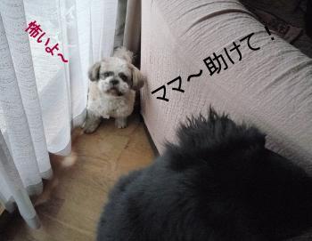 2_convert_20110214171004.jpg