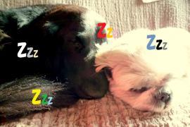 ZZZ_convert_20101207140932.jpg