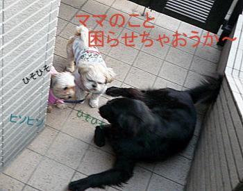 sannpo_convert_20110205113910.jpg