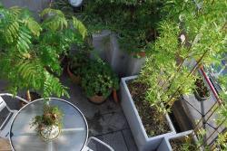 9月23日 植物紹介 003