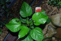 9月23日 植物紹介 023