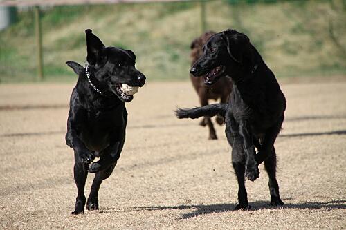 コウ&リク