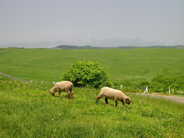 多和平の羊