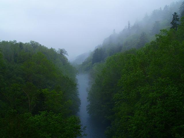 雨にけむる美瑛川