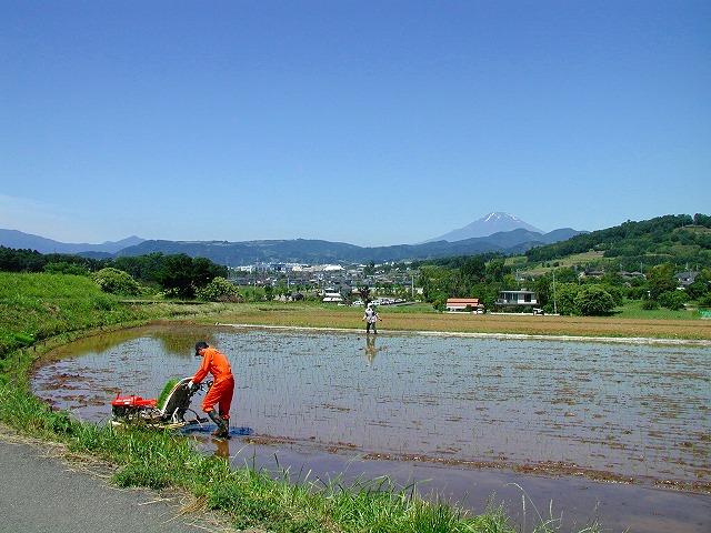 秦野の富士