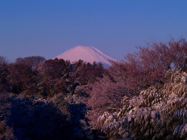 茅ヶ崎の富士