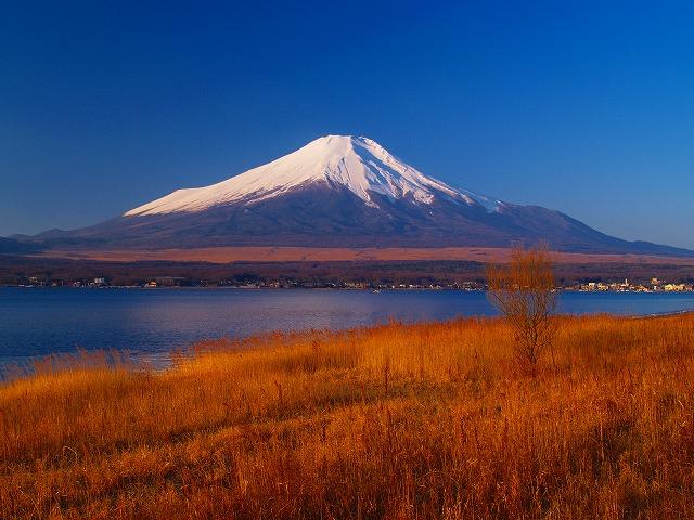 枯野と富士