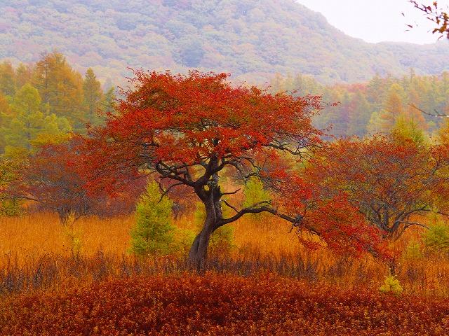 ナントカの木