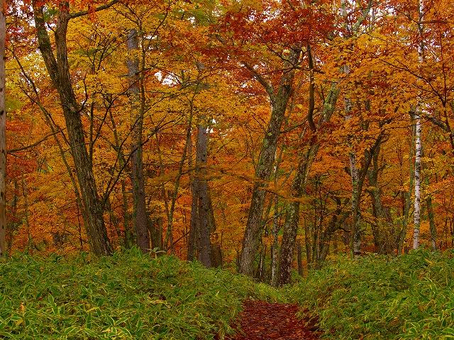 小田代の森