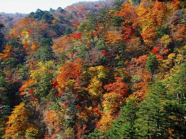 奥多摩の山の紅葉