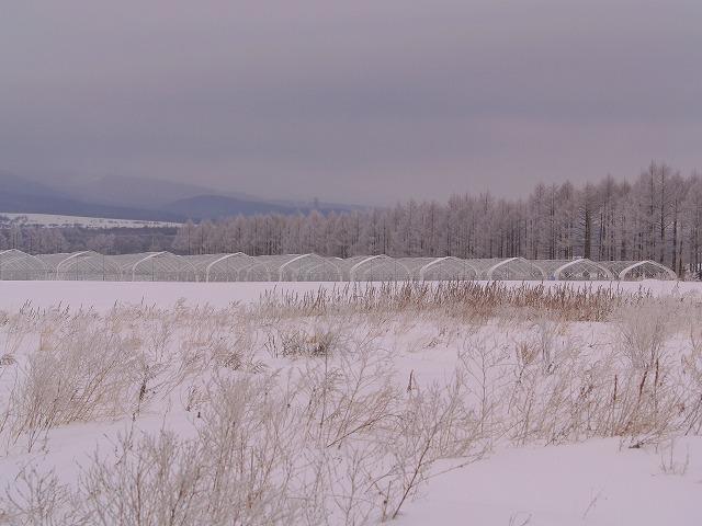 霧氷の景色