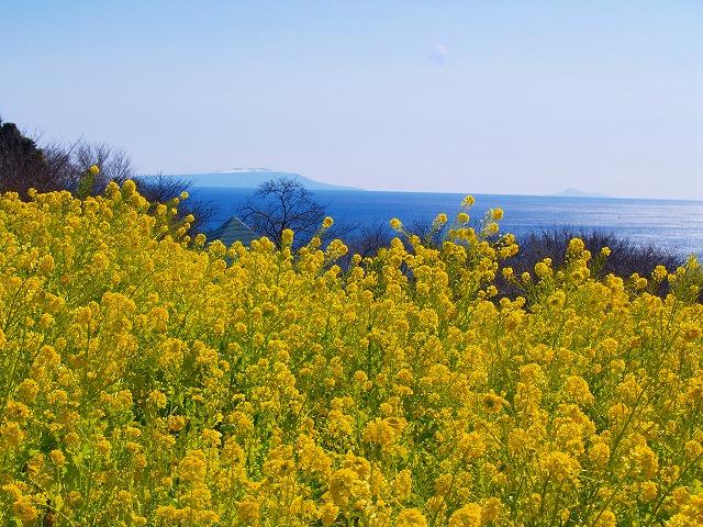 吾妻山から海を見る