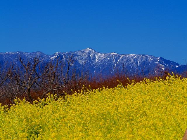 吾妻山から丹沢方面