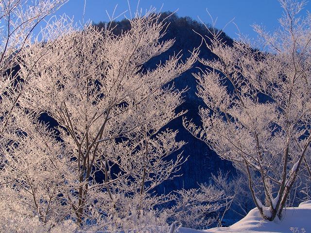 野辺山の霧氷