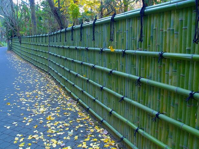 浄智寺の垣根