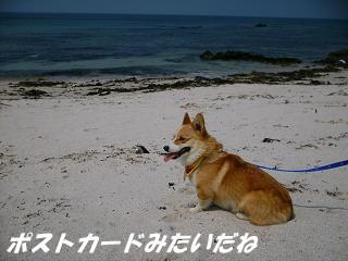 2007_0502画像0054